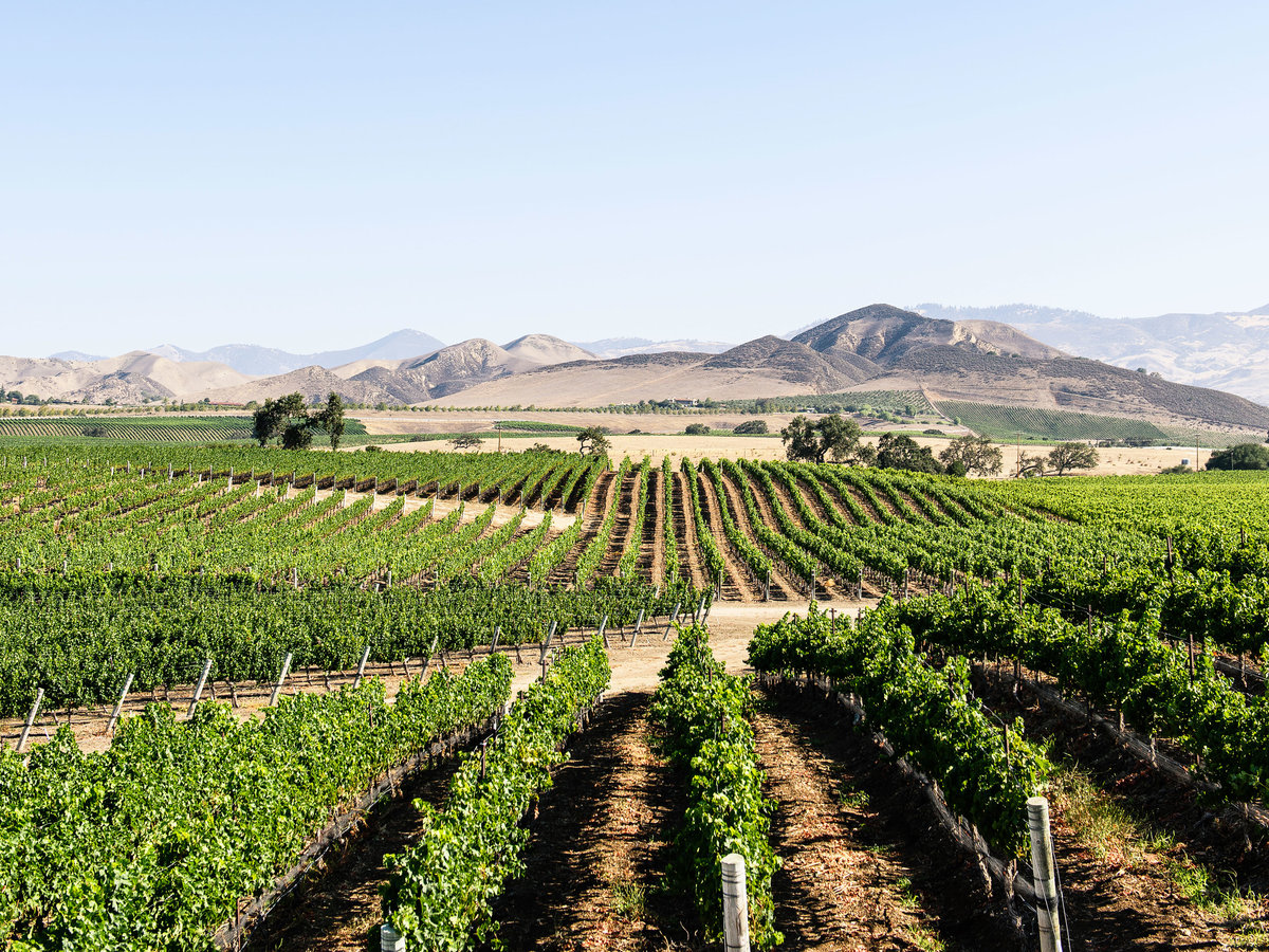 Local's Guide to Santa Ynez Valley