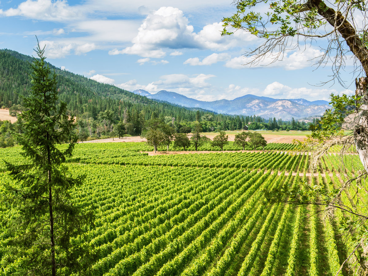 Local's Guide to Southern Oregon Wine Country