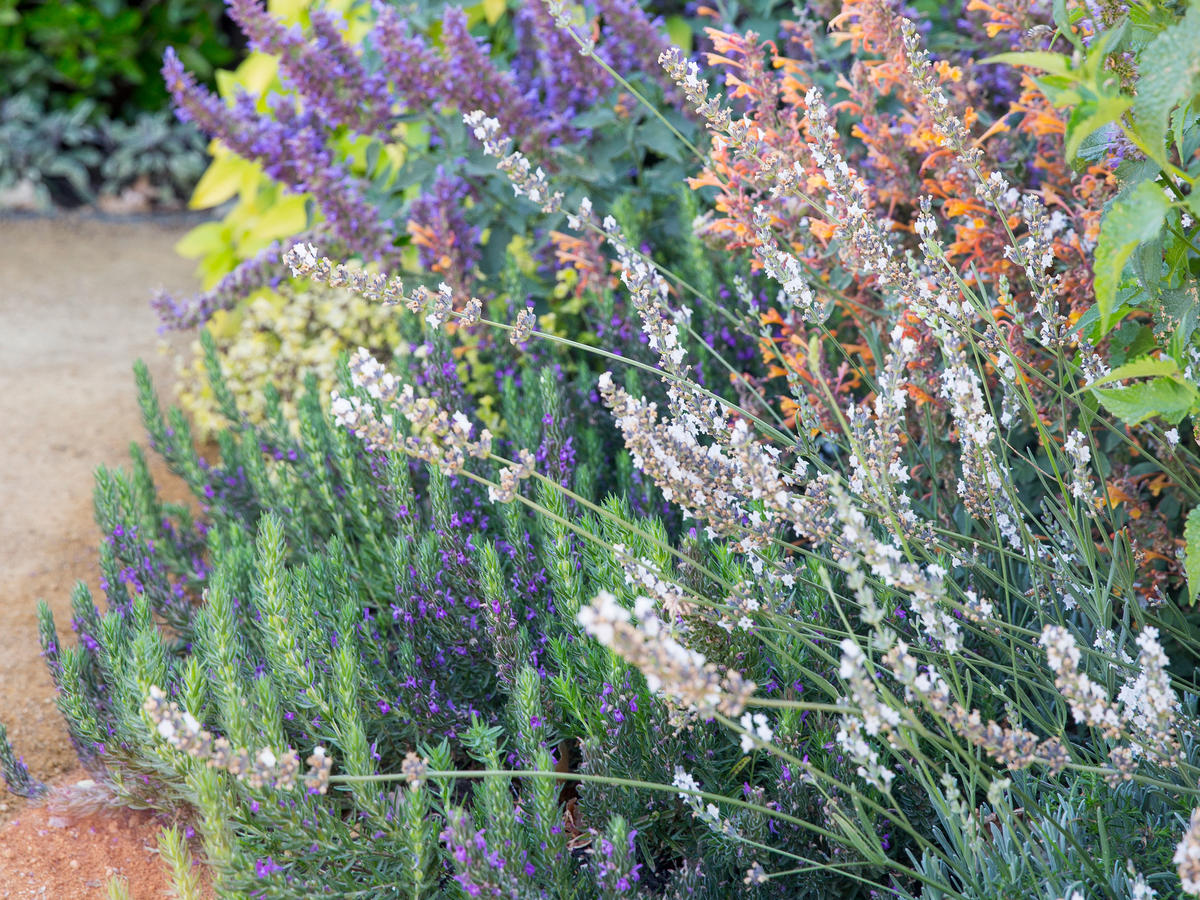 Beautiful Herb Garden Designs Sunset Magazine