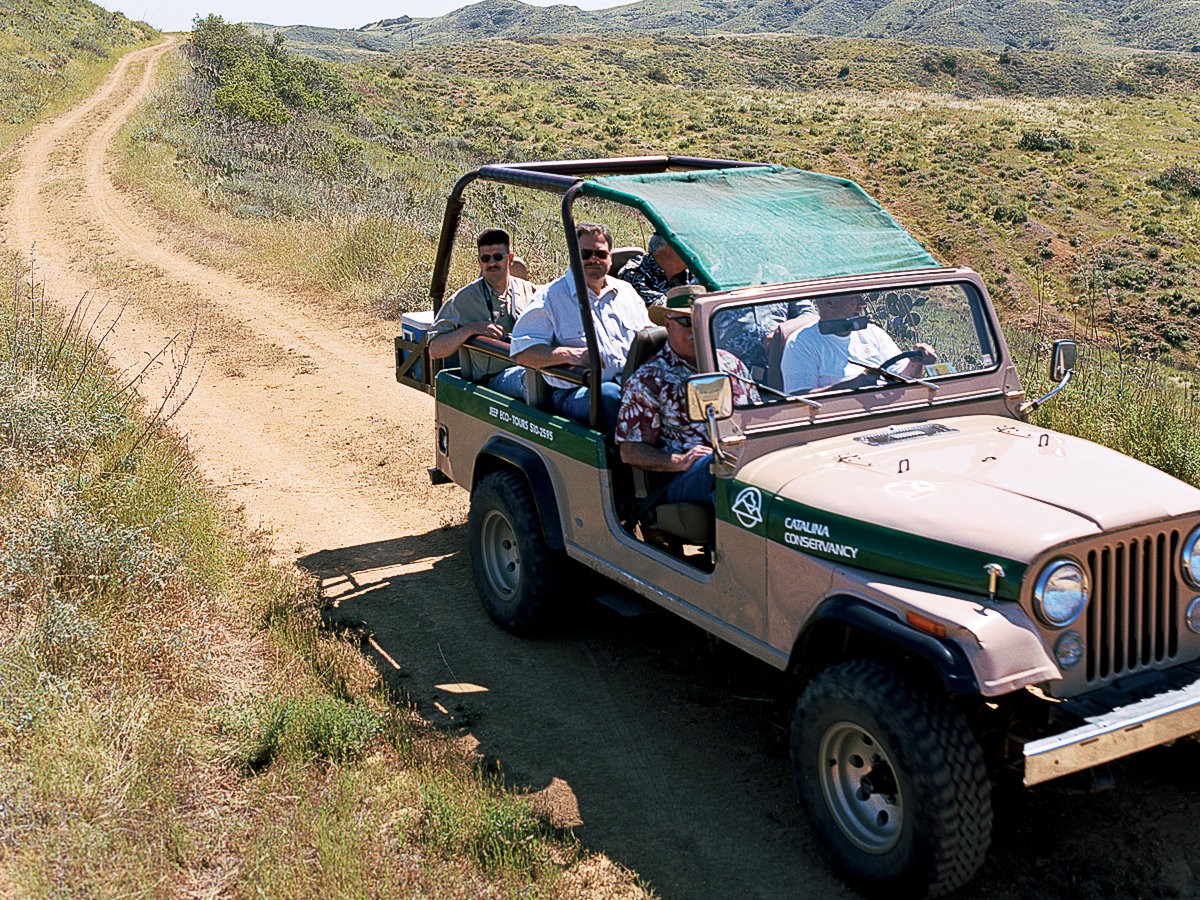 Catalina Jeep tour