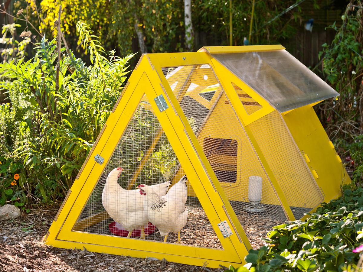 8 Super-Stylish Chicken Coops