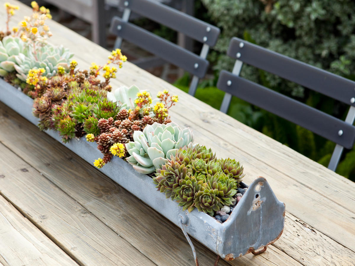 How To Keep Your Succulents Alive Thriving Easy Tips Sunset Magazine