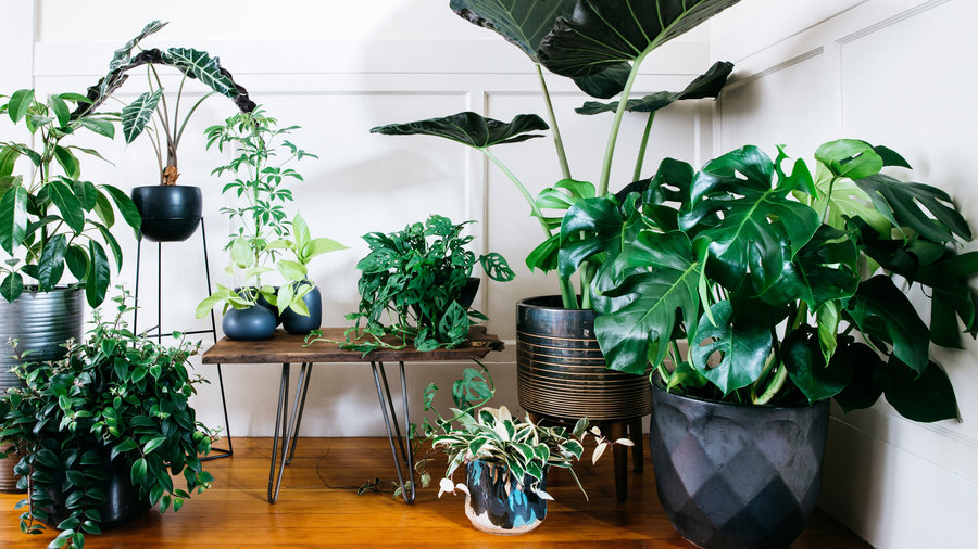 19 Ways to Design with Houseplants