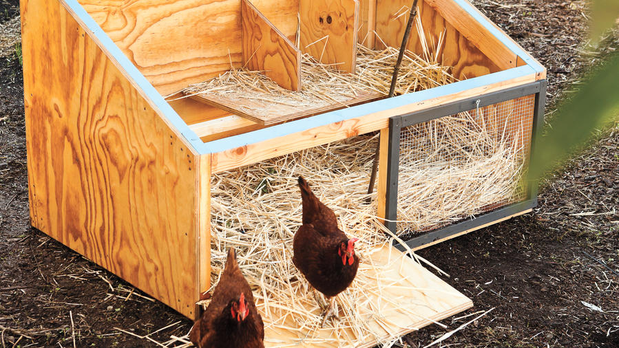 Icebox Chicken Coop