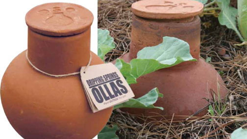 Save Water: Use An Olla