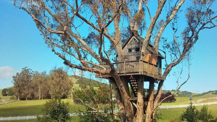 The Treehouse at Swallowtail Studios, in Petaluma, CA—one of our favorite travel finds of the week. (Photo by Andrea Minarcek.)