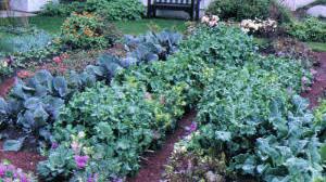 Fresh-picked produce