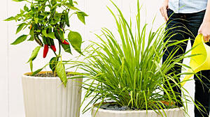 Be carefree with your plants