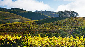 Wine country is all yours