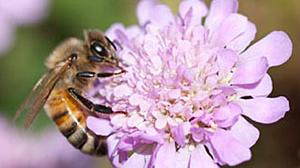 Beehive comb