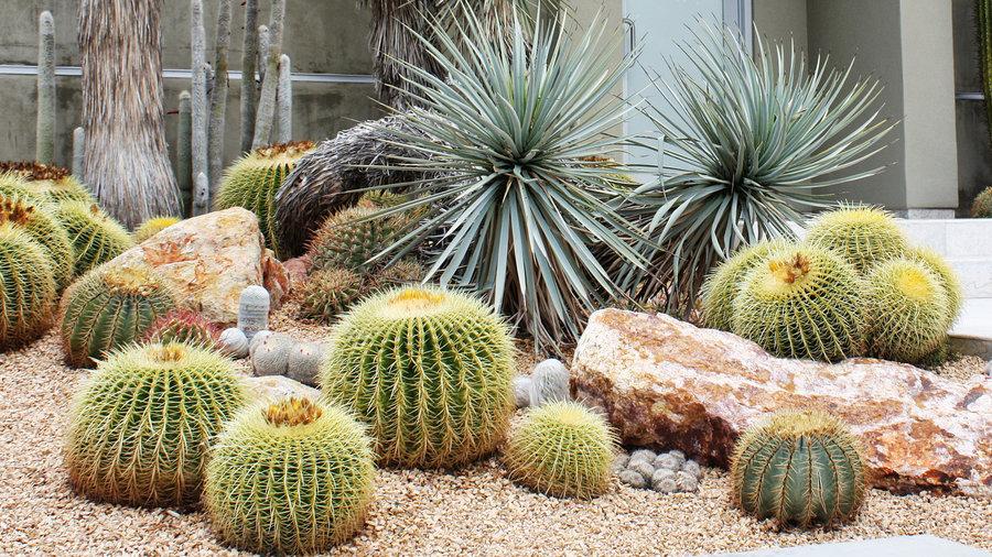cluster cactus