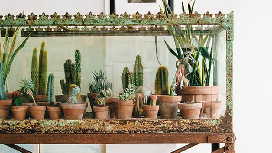 19 ways to design with houseplants sunset magazine. Black Bedroom Furniture Sets. Home Design Ideas