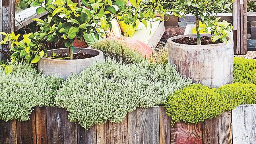 Surprising Planter Boxes Sunset Magazine