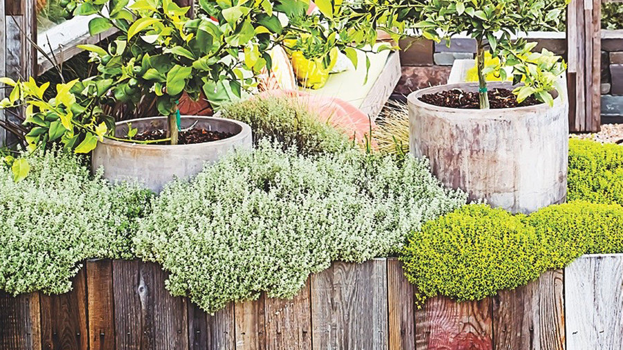 9 Surprising Twists on Planter Boxes