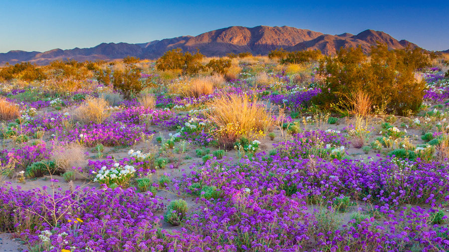 Find the Real Super Blooms This Summer with the Ultimate Floral Road Trip