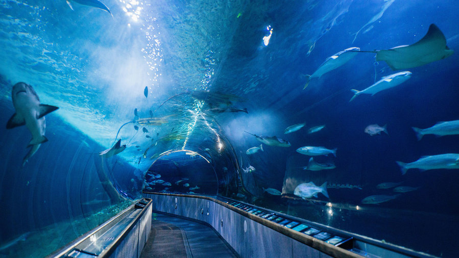 Top Aquariums to Visit - Sunset Magazine