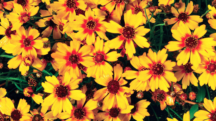 13 Common Flowers that are Poisonous | Toxic Flowers
