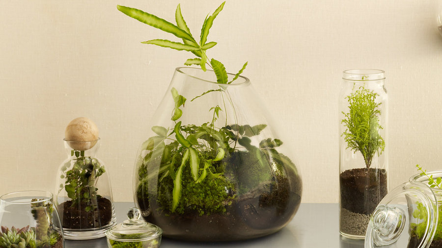 These Easy Diy Terrariums Are Mini Biodomes For Your Home Sunset