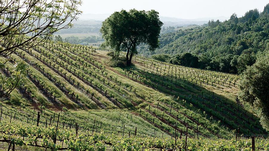 Healdsburg: Wine paradise found