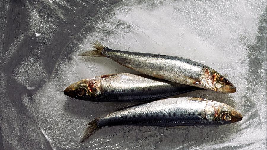 Pacific sardines