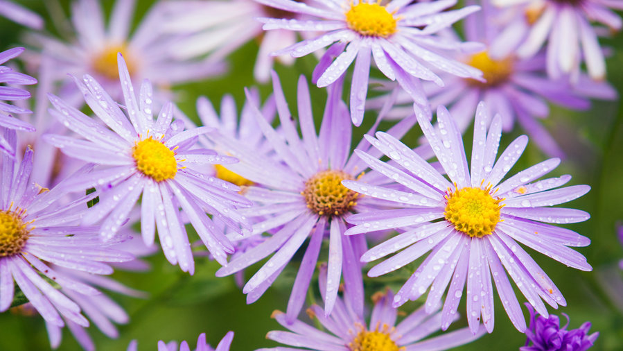 21 Best Plants for Pollinators