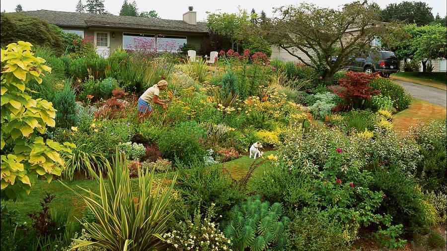 7 Inspiring Lawn Free Yards Sunset Magazine Sunset