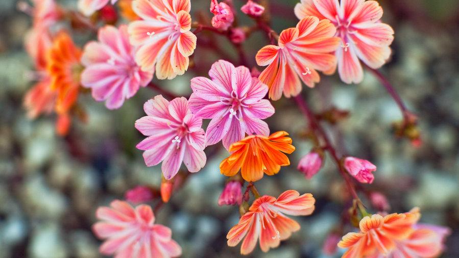 12 Great Drought Tolerant Plants Sunset Magazine
