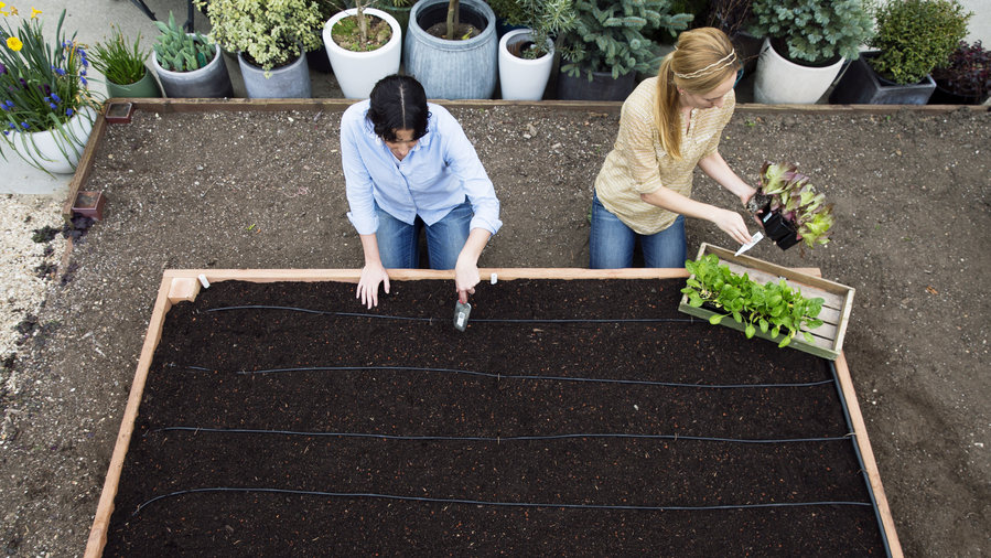 Build the Ultimate Raised Garden Bed | 20 Garden Tips And Hacks That Will Help You Become a Gardening Expert