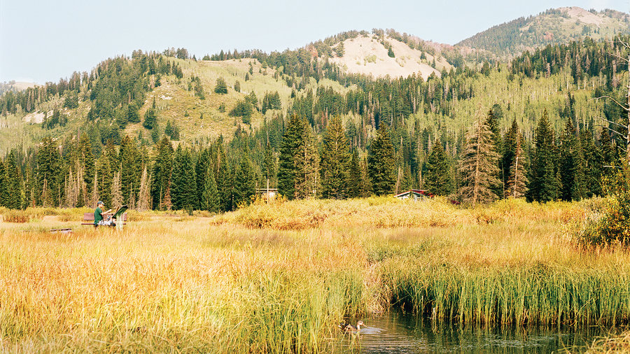 Views of tall grass, creek and mountains at Cottonwood Canyons in Snowbird, UT