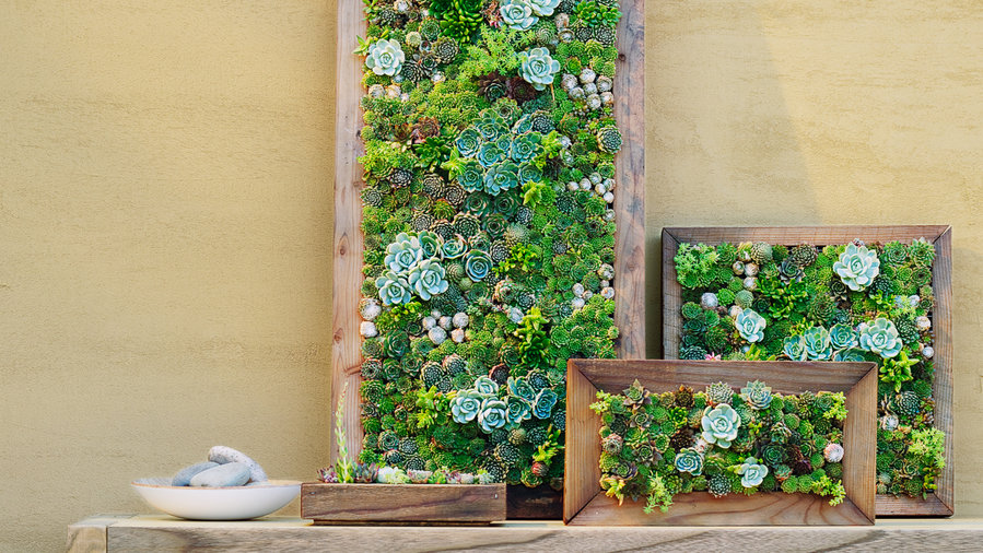 Make Your Own Diy Vertical Succulent Wall Planters Sunset