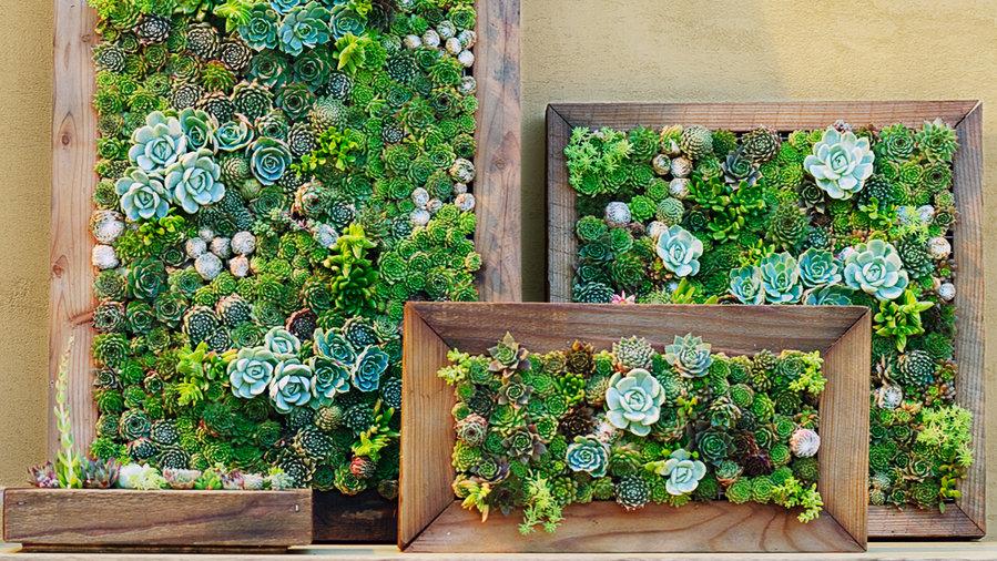 Make your own living succulent art sunset magazine for The living room channel 10 vertical garden