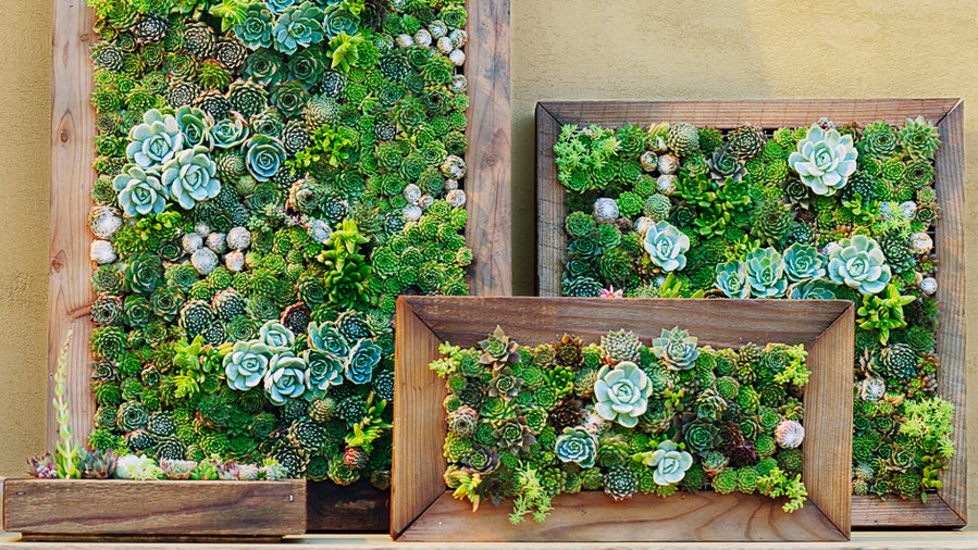 Bon How To Make Your Own Succulent Frame