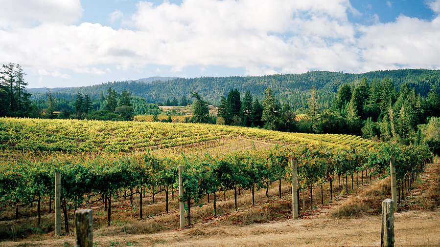 Taste your way through Anderson Valley