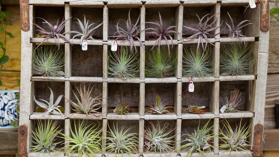 Fun ways with air plants