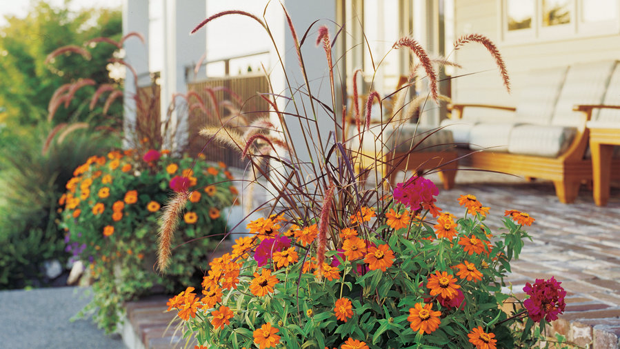 Plant a pot of living color