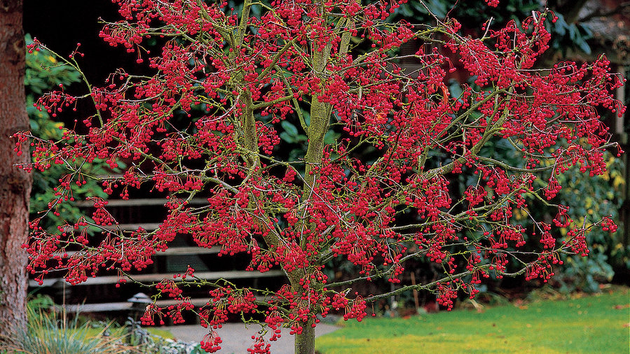 Plants With Ornamental Fall Berries For Tons Of Cool Season Color