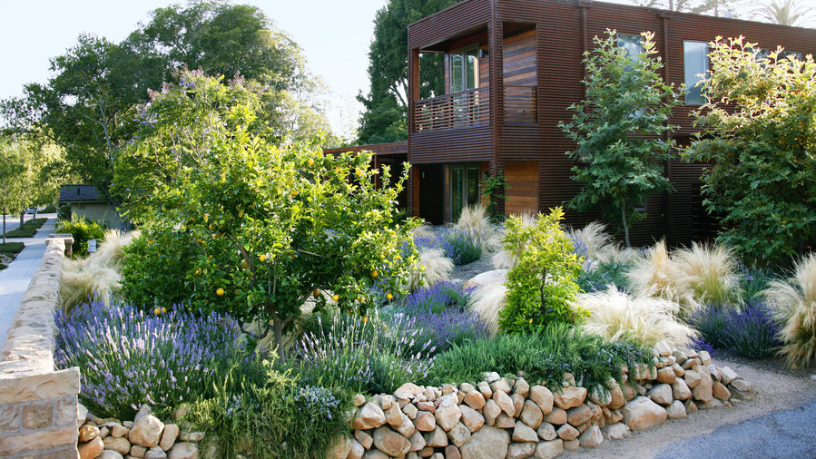 Designing With Drought Resistant Plants Sunset Magazine