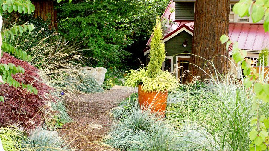 Decorative Grasses For Your Garden Sunset Magazine