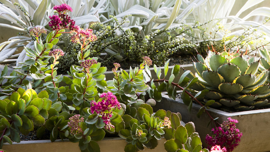 Potted Gardens 58 cool container gardens sunset magazine silver lining workwithnaturefo