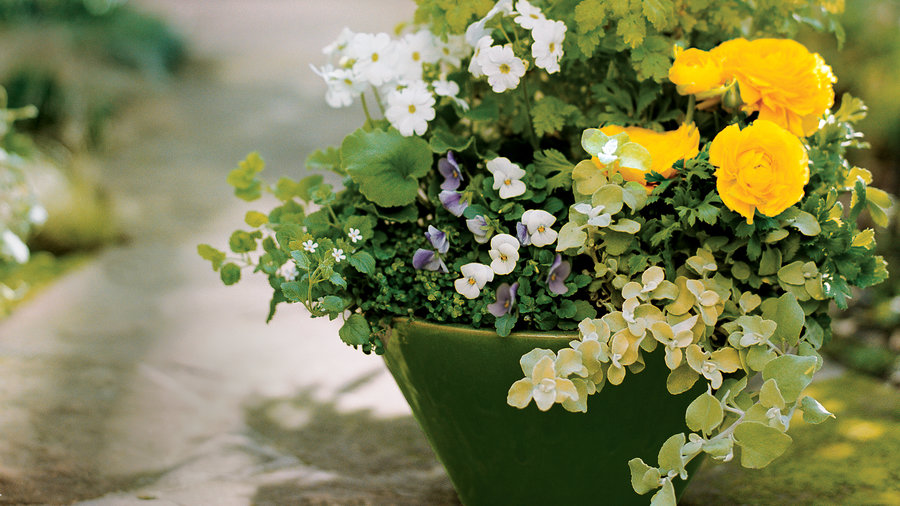 Planting ideas for garden pots & Cool Container Gardens - Sunset Magazine