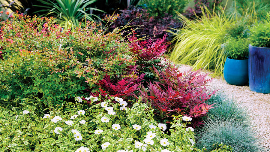 Use star-power shrubs