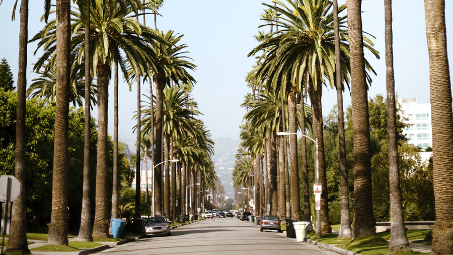 Canary Island Date Palm (Phoenix canariensis) & 5 Iconic Palm Trees for Home Gardens - Sunset Magazine - Sunset ...