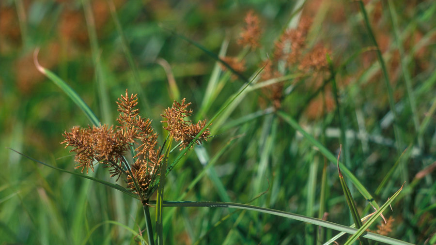 how to control weeds