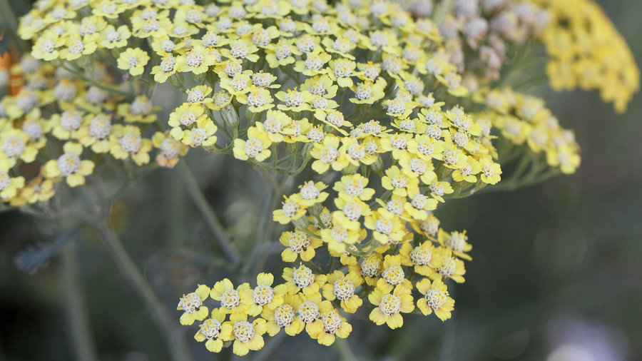 Instant Fall Garden : Flowers to plant for instant fall color sunset