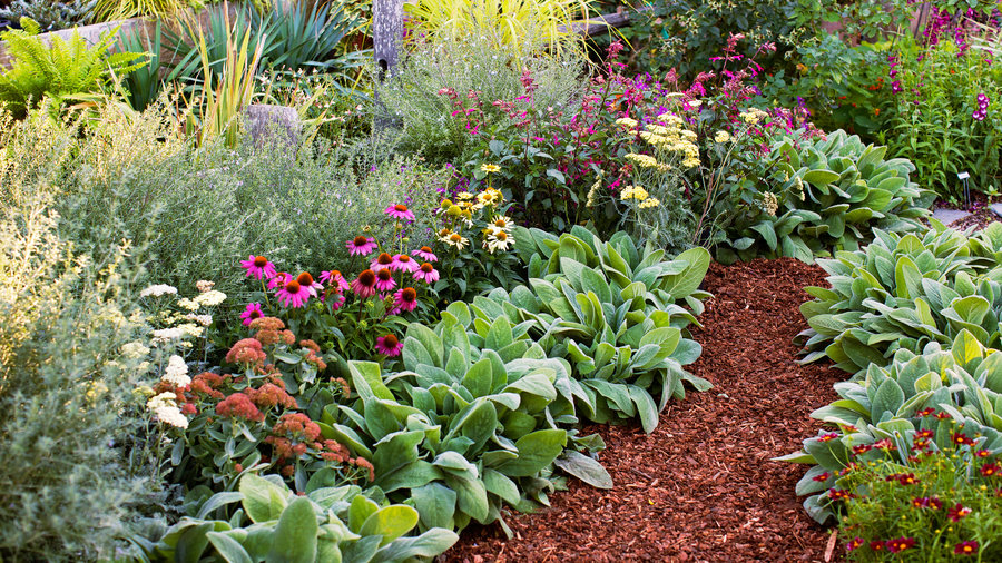 8 flowers to plant for instant fall color - Fall Garden Plant
