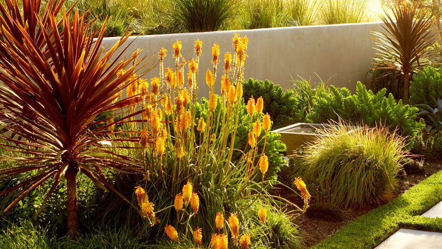 Brighten beds with fiery flowers