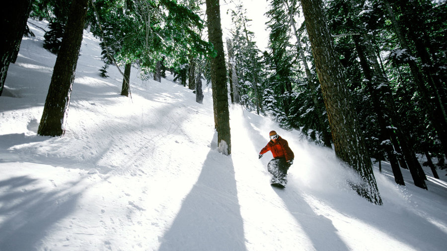 Snowboarder going down mountain surrounded by trees at Heavenly