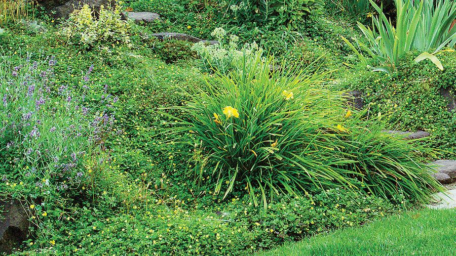 Slope Garden Tips Sunset Magazine