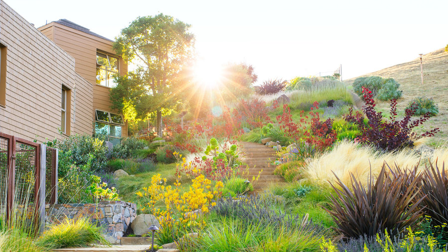 Water-Wise Flowers to Plant - Sunset Magazine