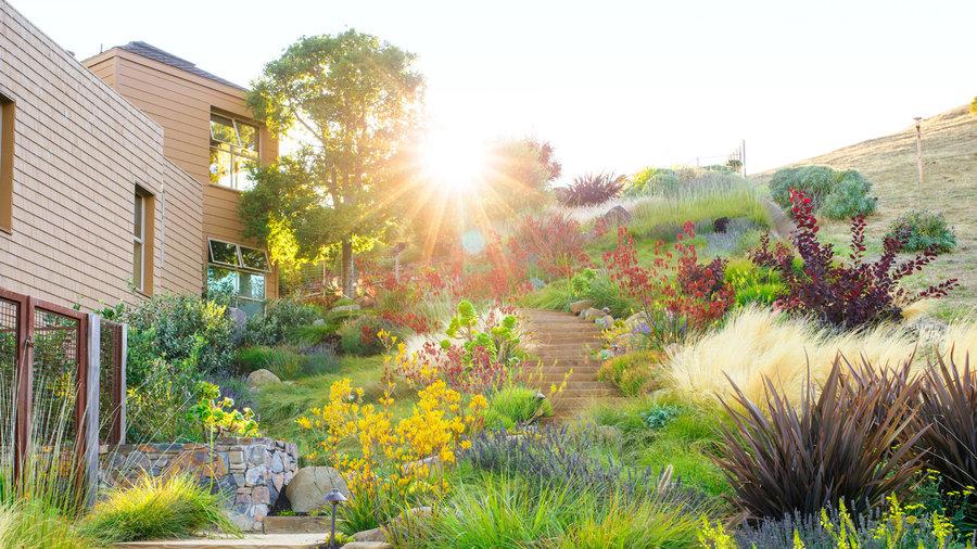 water wise garden designs. Water Wise Garden Design Guide to Low Maintenance Gardening  Sunset Magazine